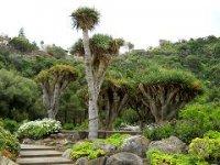 «Канарский сад» Гран Канарии