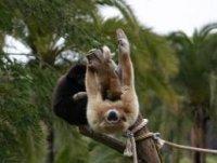 Пальмовый парк (Palmitos Park) Часть 1